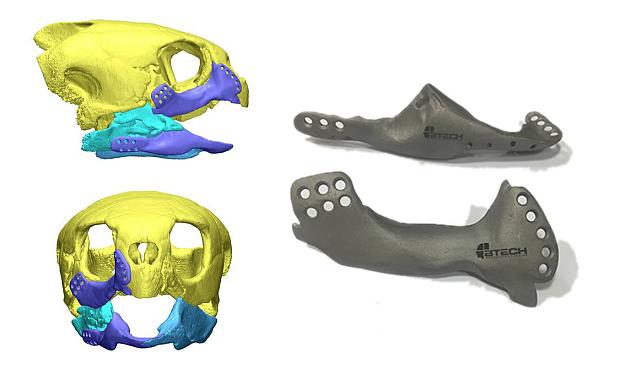 3D printed turtle beak