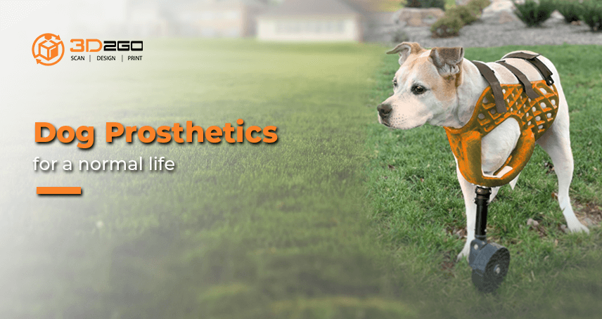 Dog Prosthetics For A Normal Life