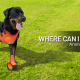 A blog banner Where can I 3D Print Animal Prosthetics and Braces?