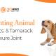 3D Printing Animal Orthotics & Tamarack Flexure Joint