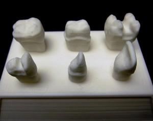 Teeth Models